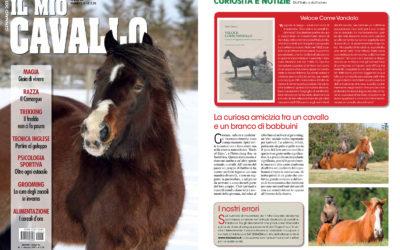 Veloce come Vandalo, Il mio cavallo, gennaio.2015