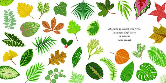 piccola guida alle foglie 1