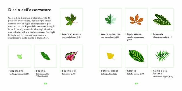 piccola guida alle foglie 5